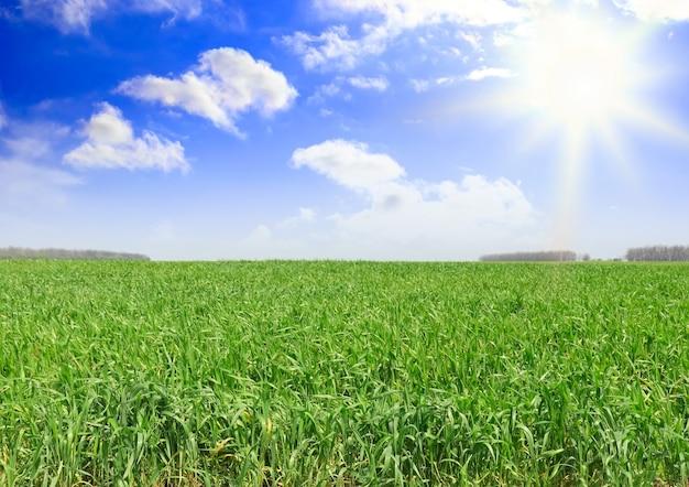 풍경 - 푸른 잔디, 푸른 하늘과 흰 구름