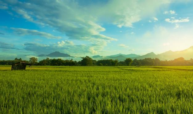風景緑の田んぼ梅雨と夕日美しい自然の風景