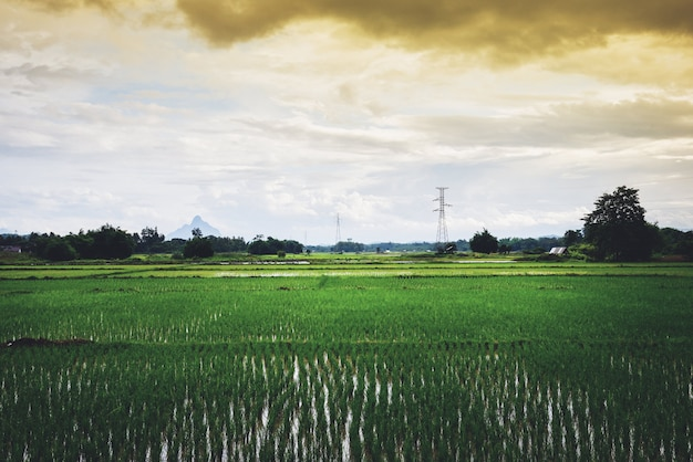 Landscape green rice field with electric pole high voltage and mountain sunset