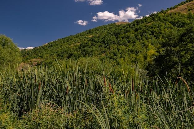 Paesaggio di colline coperte di cespugli e alberi sotto la luce del sole e un cielo blu