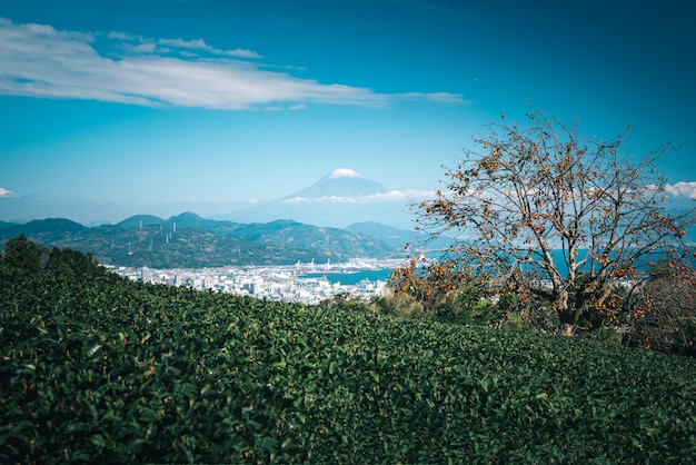 Landscape image of mountain fuji with green tea field at daytime in shizuoka, japan.