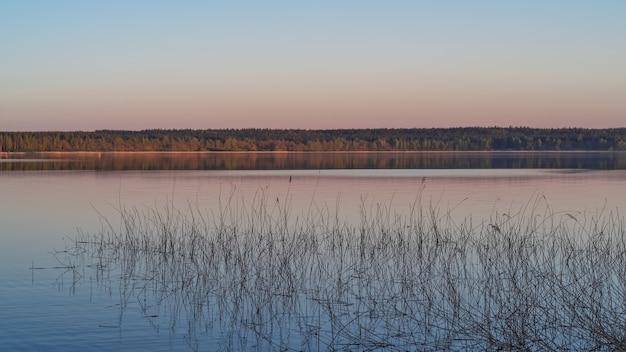 夕方の光の中で美しい森の湖の風景画像