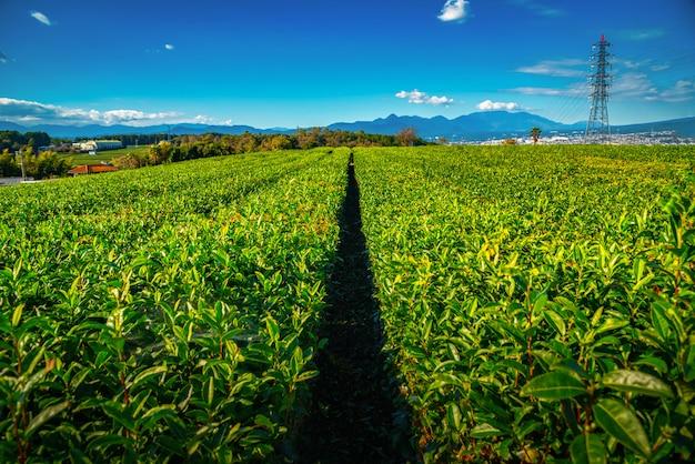 Пейзажное изображение горы. фудзи с полем зеленого чая в дневное время в сидзуока, япония.