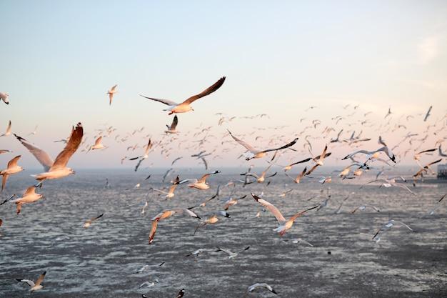 日没時に空を飛ぶカモメの風景画像。