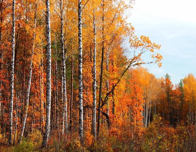 가 숲 밝고 화창한 날에 풍경.