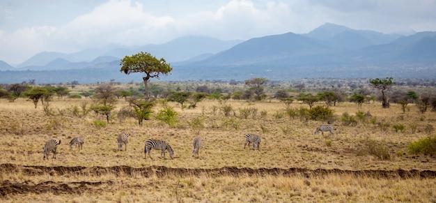 Пейзаж в кении, с животными, деревьями и холмами