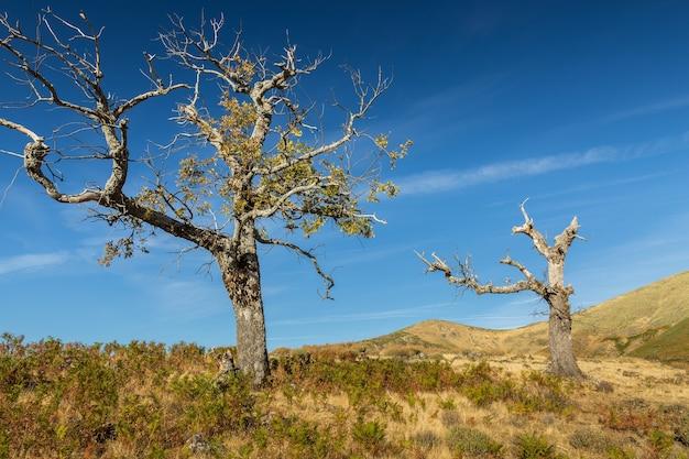 スペイン、エストレマドゥーラ州、プエルト・デ・ホンジュラスの風景 無料写真
