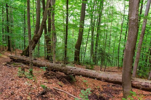 Пейзаж в глубинке леса весной