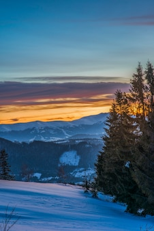 トウヒの森と雪の吹きだまりのある山の谷の風景