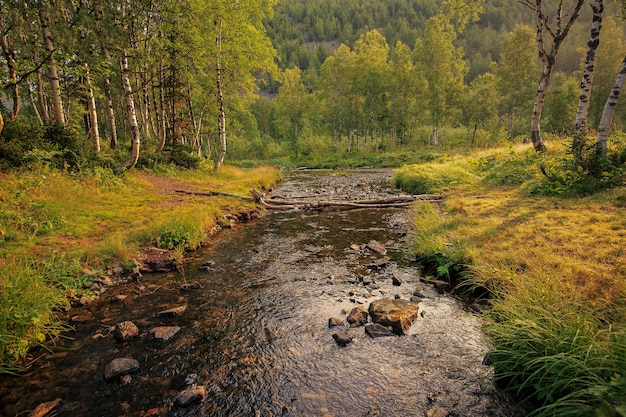 여름의 끝자락에 있는 산의 풍경 나무들 사이 숲 속의 작은 깨끗한 강