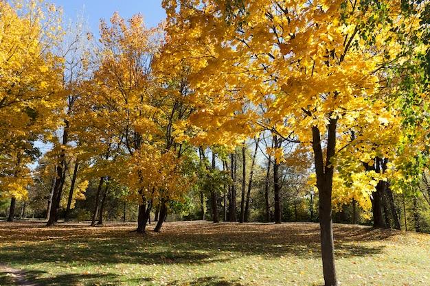 Пейзаж в парке, солнце и освещение в городе во время бабьего лета