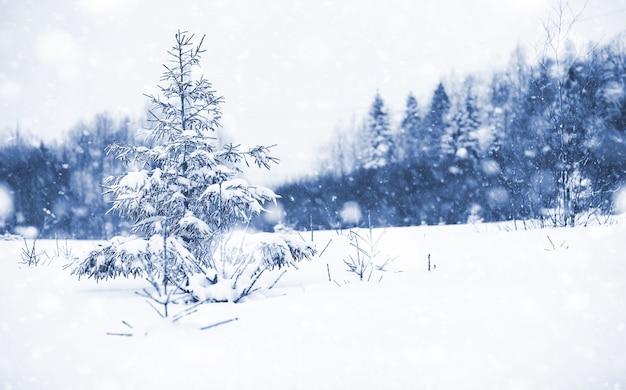 Пейзаж в зимний пасмурный день заснеженных полей и лесов