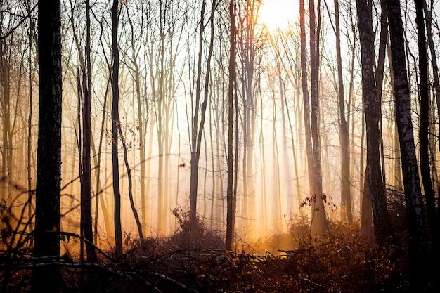 朝の秋の森を見下ろす暖かい色の風景