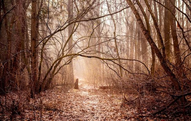 朝の秋の森と暖かい色の風景