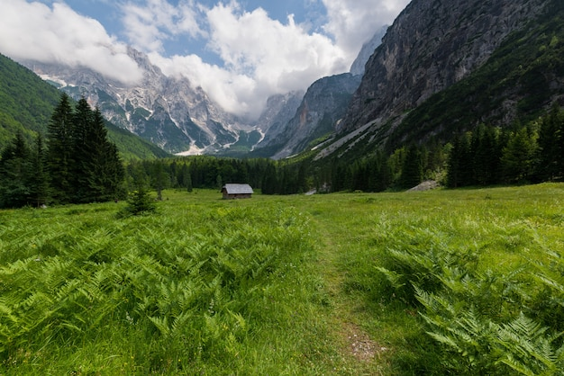 Landscape in krnica valley