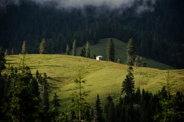 Landscape of meadow with pines and small building