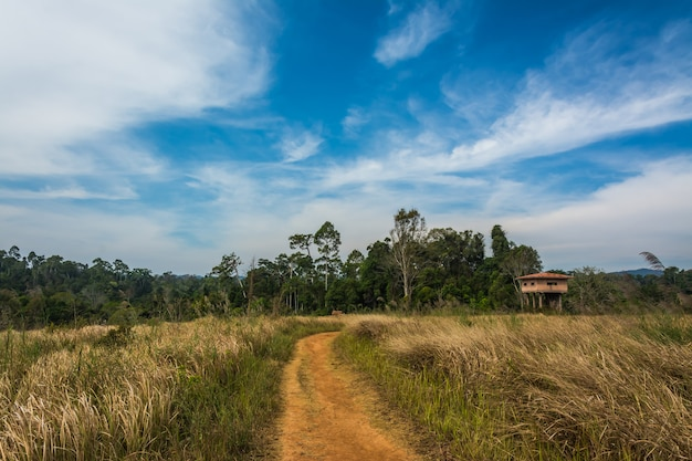 Landscape of meadow with tree, khao yai national park, thailand
