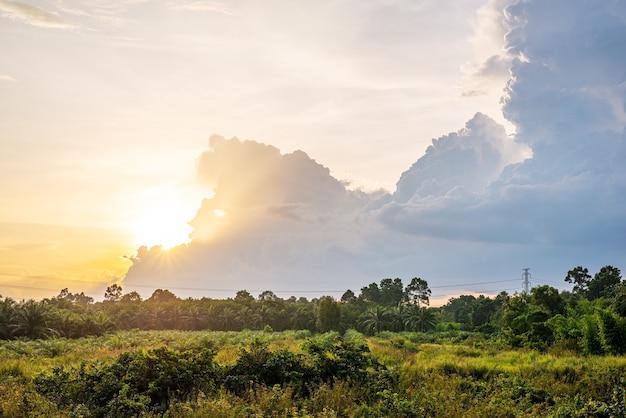 空と白い雲と朝の光の中で緑の草と風景の牧草地の景色