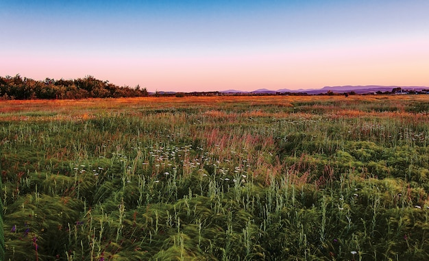 Landscape meadows with high grass in the foothills of the north caucasus, beautifully lit summer soft setting sun