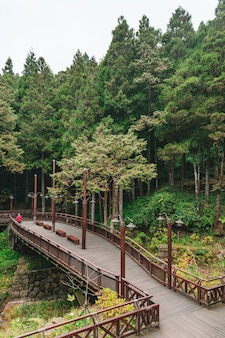 Landscape of the misty cypress and cedar forest and bridge in alishan.