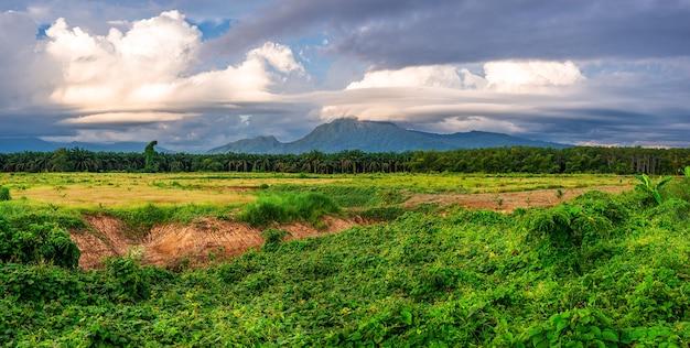 青い空と白い雲と夕方の光の中で緑の草、パノラマの風景の山の景色