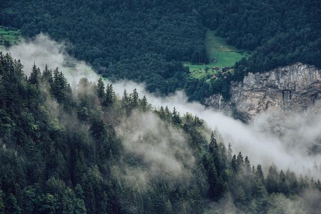 Paesaggio di montagne coperte di foreste e nebbia sotto la luce del sole
