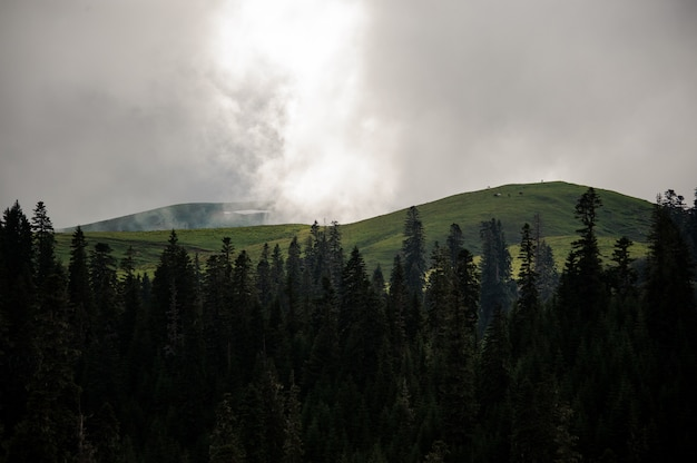Landscape of the mountains covered with white fog in the foreground of evergreen tree forest