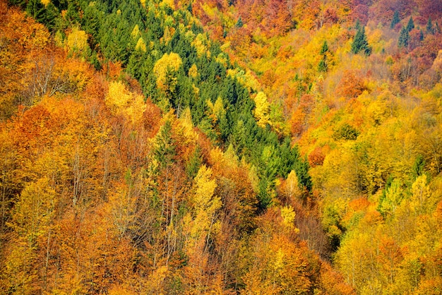 Landscape of mountains during autumn time. beautiful orange and red forest, many trees on the orange hills. autumnal trees and leaves texture, background.