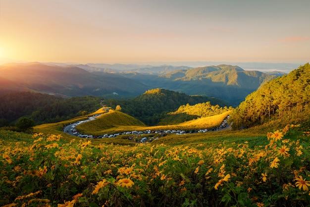 Пейзаж природа цветок тунг буа тонг мексиканское поле подсолнечника в зимний сезон во время восхода солнца в мае хонг сон недалеко от чиангмая, таиланд.