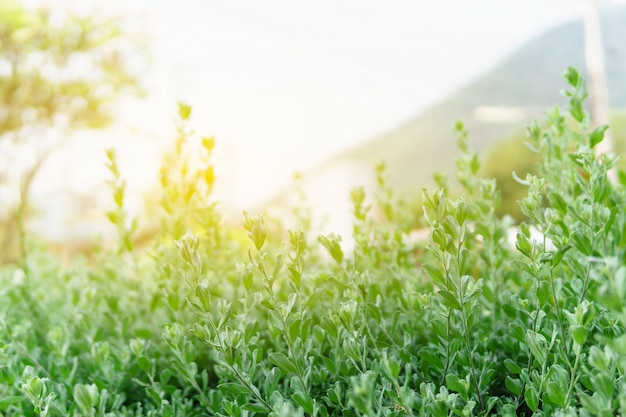 Landscape nature view of green leaf in garden in summer