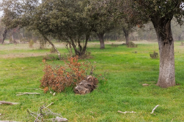 Landscape near caceres, extremadura, spain,