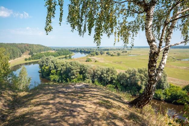 Пейзаж березы на высоком берегу реки