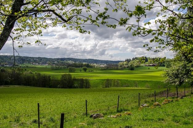 昼間の曇り空の下、緑に覆われた野原の風景