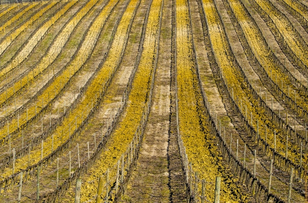 햇빛 아래 농촌 지역에있는 필드의 풍경