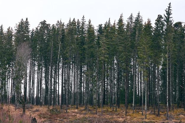 낮에는 흐린 하늘 아래 녹지로 덮인 숲의 풍경