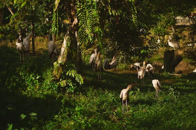 日光の下で地面に立っているペリカンと緑に覆われた森の風景