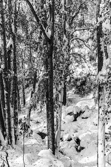 낮에는 눈에 덮여 나무에 둘러싸인 숲의 풍경