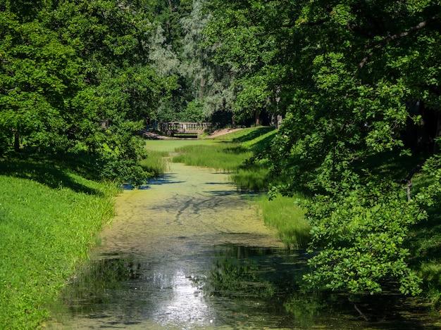 녹색 공원에서 강 풍경