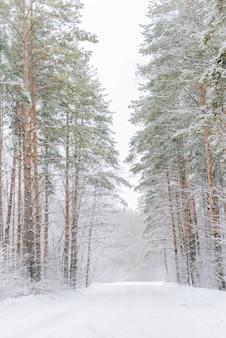 Пейзаж заснеженного соснового леса под снегопадом