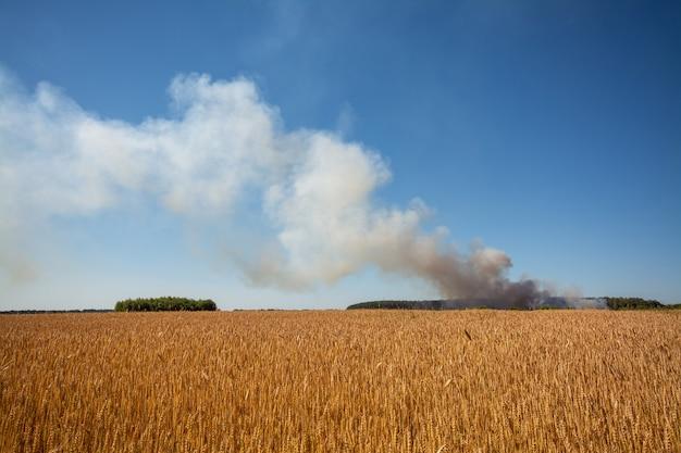 배경에 연기가 많은 농경지의 풍경