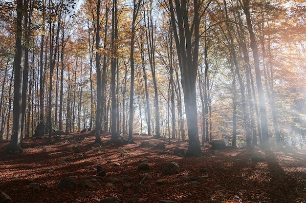 Пейзаж осеннего леса на закате