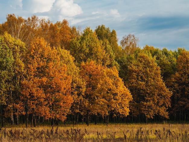 Пейзаж красивого осеннего леса