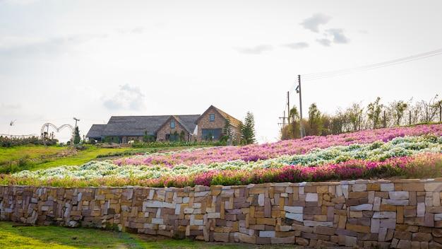 夏の夕日の赤い色の下の山の上の美しい家で咲くピンクと白の花畑の風景。
