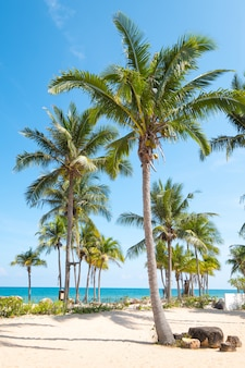 Landscape of coconut palm tree on tropical beach in summer