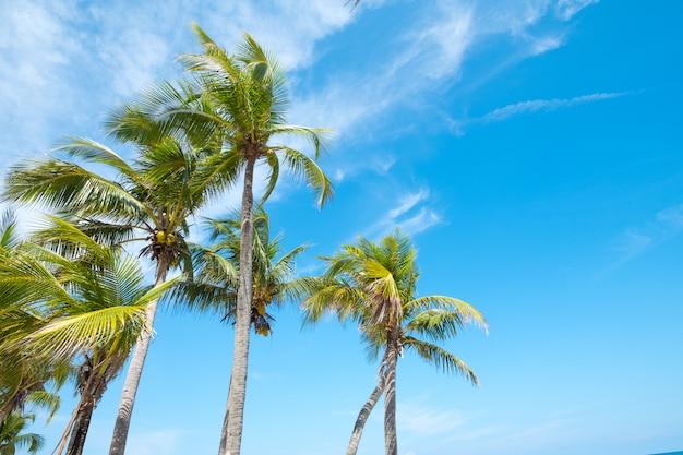 여름에 열 대 해변에서 코코넛 야 자 나무의 풍경.