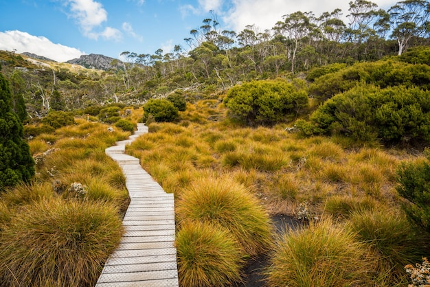 Ландшафт горы колыбели тасмании, австралии.