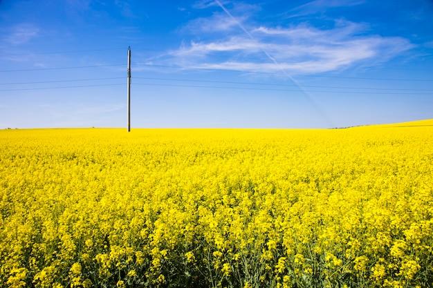 黄色の花と青い空のフィールドの風景