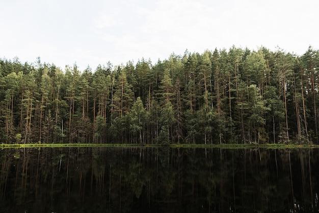 松と黒い湖のある森の風景。