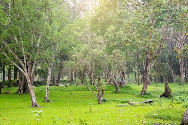 Ландшафт свежего зеленого леса во время идти дождь в юго-восточной азии.