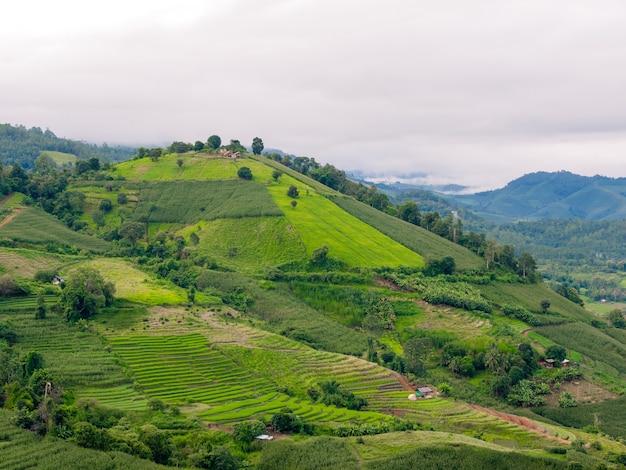 Pa에서 하얀 흐린 하늘과 산 경사면에 신선한 녹색 라이스 테라스와 옥수수 밭의 풍경 ...